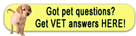 Rockland Animal Hospital - Rockland Maine - Find answers to your pet questions here.